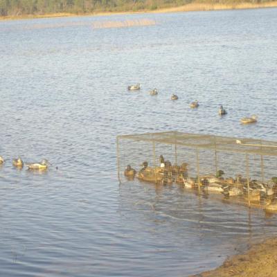 Parge à canards